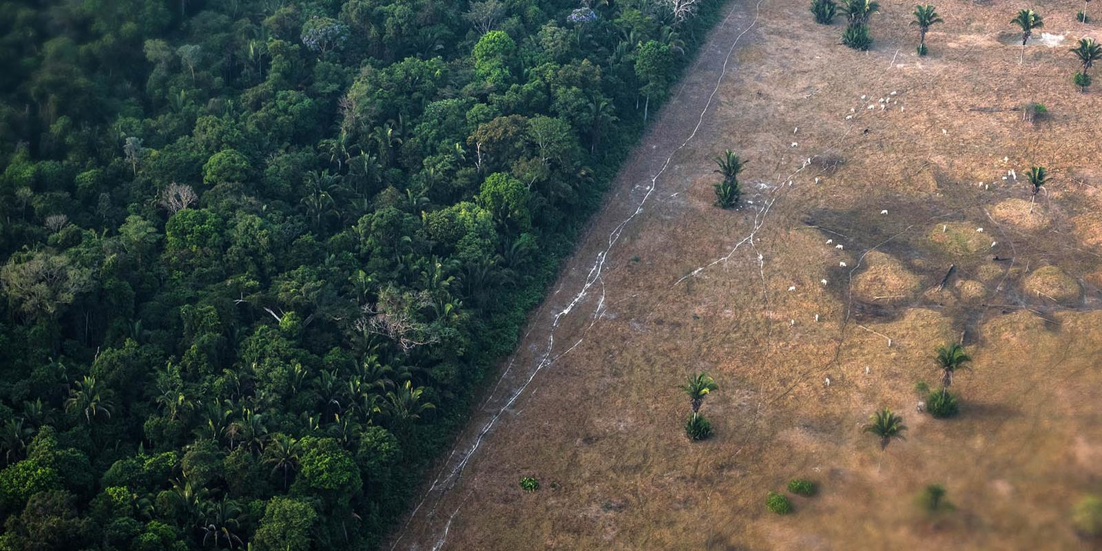 deforestation-and-climate-change