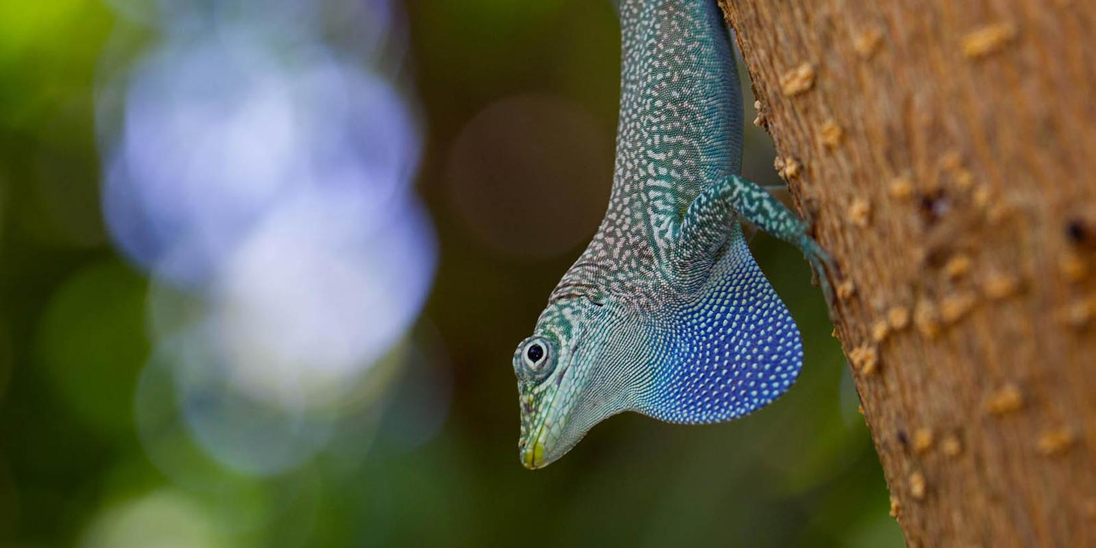 unearthing-investor-action-within-biodiversity-finance